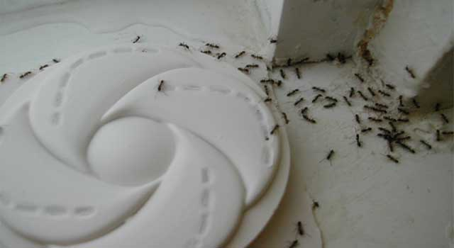 Best Way to Kill Ants in House