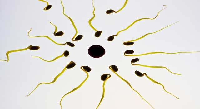How to Increase Sperm MotilityHow to Increase Sperm Motility