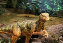 10 Facts about Dinosaurs