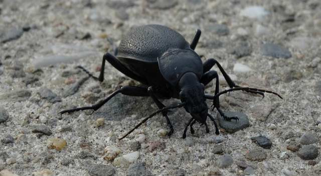 How to Get Rid of Beetles