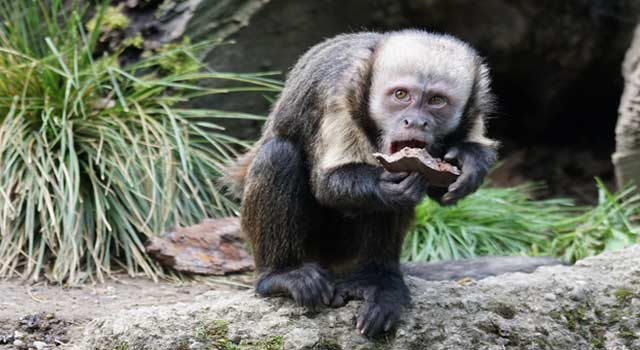What do Monkeys Eat, Facts about Monkeys