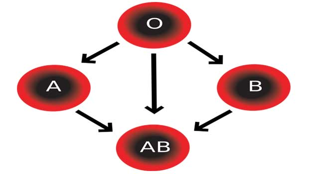 How do you Find Out your Blood Type