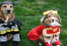 How to Make Small Dog Costume