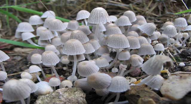 How Can You Tell Poisonous Mushrooms