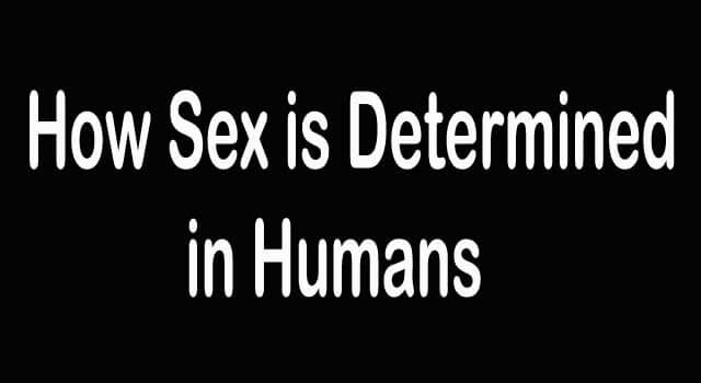 How Sex Is Determined In Humans