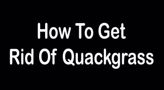 how to get rid of quack grass in garden