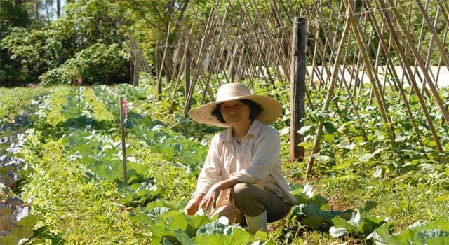 How Nutrients Are Replenished in the Soil