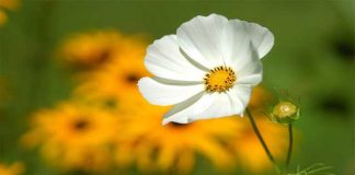How to Plant Flower Garden Step by Step