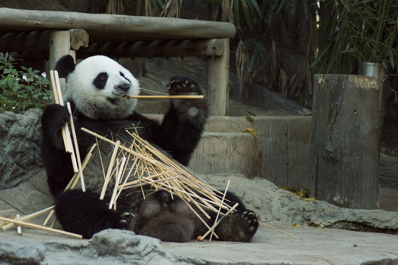 10 Interesting Facts About Pandas